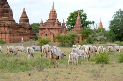 Temples of Bagain